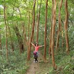 100本のヒメシャラが群生するヒメシャラ並木
