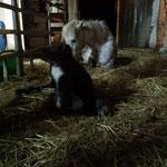 ein neugeborenes Fohlen