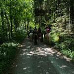 Tagesritt durch den grünen Wald