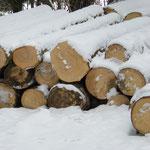 Beim Aussuchen der Stämme im Wald beginnt unser Werk, was zum edlen Möbel werden soll