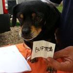 Buftea