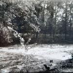 Wehr mit dem Wald im Hintergrund