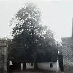 Eisernes Tor mit Linde
