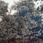 Das Gartenhaus oder auch Lusthäuschen hinter dem Tulpenbaum