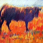 Koe in de ochtend zon