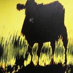Zwarte koe 2