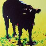 Zwarte koe 1