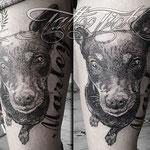 Portrait Hund01