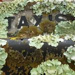Taxis La Teste 33 Gironde