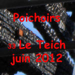 2012 Le Teich 33 Carmen tour