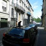 Le chat Bordeaux