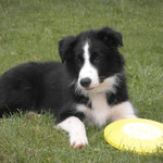 Baxter mit 4 Monaten