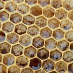 apiculture miel grenoble