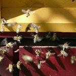 apiculture tavernolles