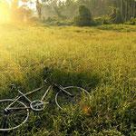 accès des racines en chantier jardin tavernolles