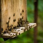 apiculture ruche grenoble