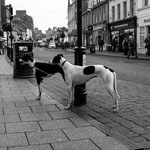 BLACK & WHITE - Ayr, Scotland