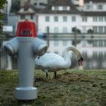 12. Etappe - Feuerthalen, Obere Rheingasse