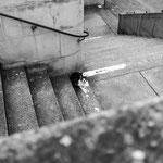 LONE CAT - Zurich, Zwingliplatz