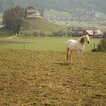 12. Etappe - Waltalingen, Tannholz, Blick auf Schloss Girsberg