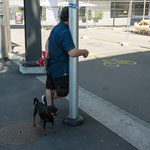 MAN WITH DOG - Zurich, ToniAreal