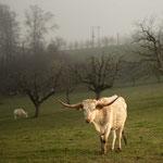 "3. Etappe - Buus, Mitteleigenried, ""Texas Longhorn Ranch"""