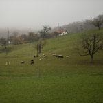 2. Etappe - Nusshof, Buchmattweg, Blick Richtung Nusshof
