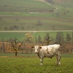2. Etappe - Kt. Aargau, Feldmett, oberhalb von Maisprach