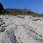 Superficie della collina principale fossilifera.