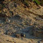 Accumuli di conchiglie nelle depressioni del terreno, dove si ridepositano grazie alle acque meteoriche.