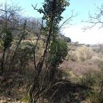 Veduta della cava dal boschetto adiacente.