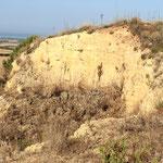 Parete calcarenitica di località Pisciarello, Tarquinia