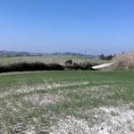 Campi fossiliferi nei dintorni di Orciano Pisano.