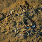 Gli accumuli comprendono principalmente bivalvi: si nota Acanthocardia, Barbatia mytiloides, Aequipecten, Venus, Ostrea e Neopycnodonte.