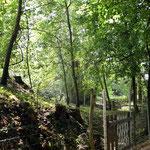 L'inizio del percorso del Rio Carbonaro.