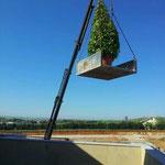 Instalación de un jardín en un ático particular