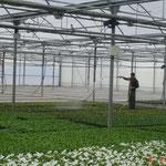 Visita al vivero Agriflor en Huerta