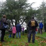 Excursión otoñal por las Sierras de Francia y Bejar: Aprendiendo a identificar coníferas en Candelario