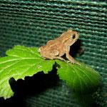 AG Amphibien