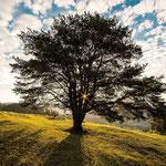 Denk mal Baum