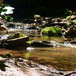 AG Fließgewässer/ Limnologie