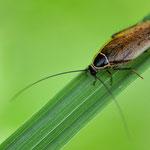 AG Insekten