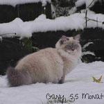 Erster Schnee im Dezember