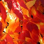 feuriger Herbst - 72 Punkte