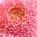 Losse dubbele kaart Pretty Pink 2