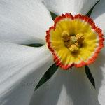 Losse dubbele kaart lekker lente Narcis