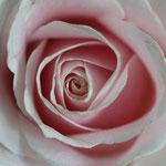 Losse dubbele kaart Pretty Pink 6
