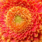 Losse dubbele kaart zoom and bloom 1.6