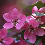Losse dubbele kaart Bloesem fel roze