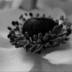 Black&White 1